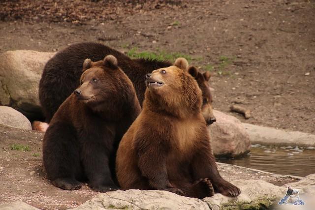 Tierpark Hagenbeck 26.07.2015 2