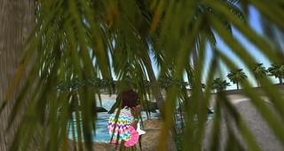 Tree pondering