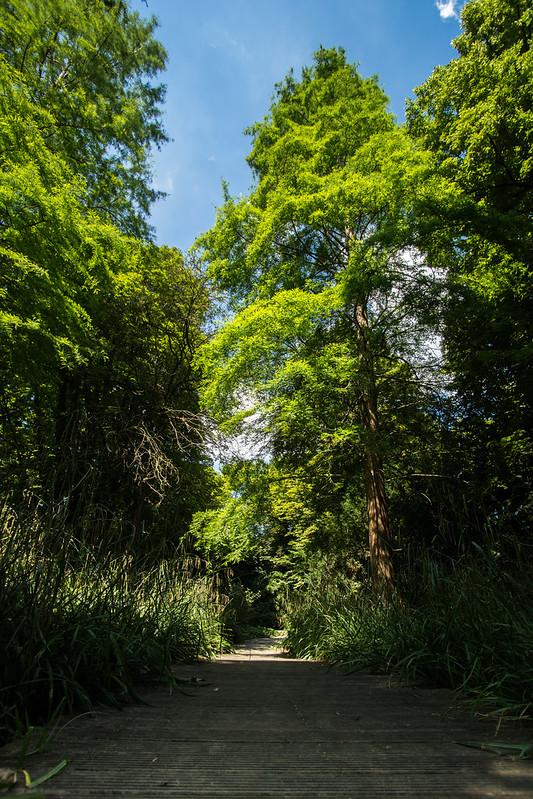 Herzogenriedpark II