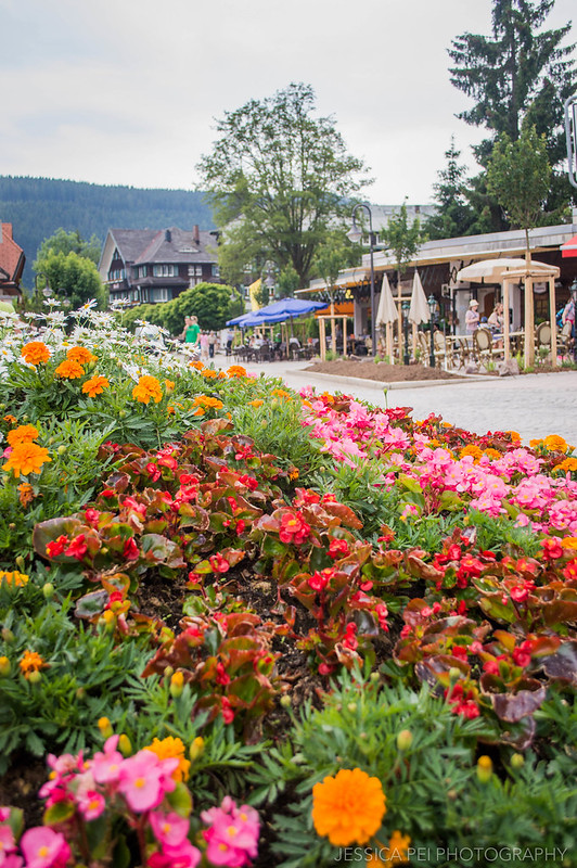 Titisee Germany Black Forest