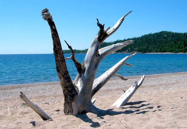 Old Woman Bay driftwood