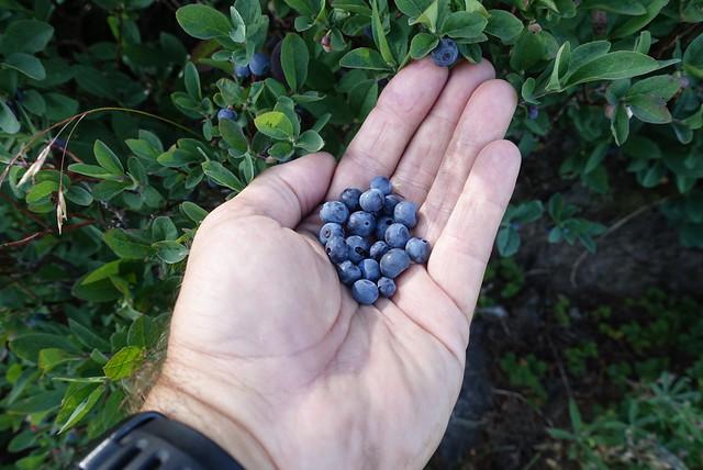 Huckleberry snack