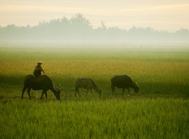 Morning Mist, Hue, Vietnam, 1967 - Sương mai ở Huế - Photograph by Winfield Parks