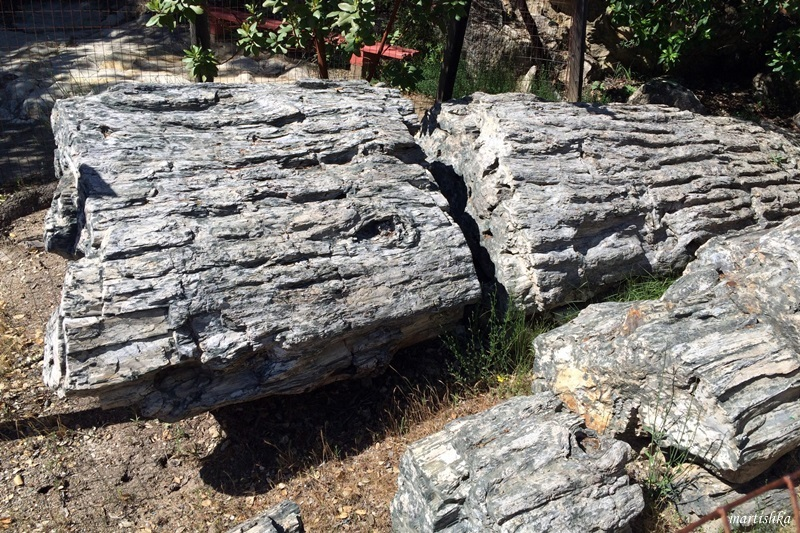 Calistoga_Petrified Forest (22)