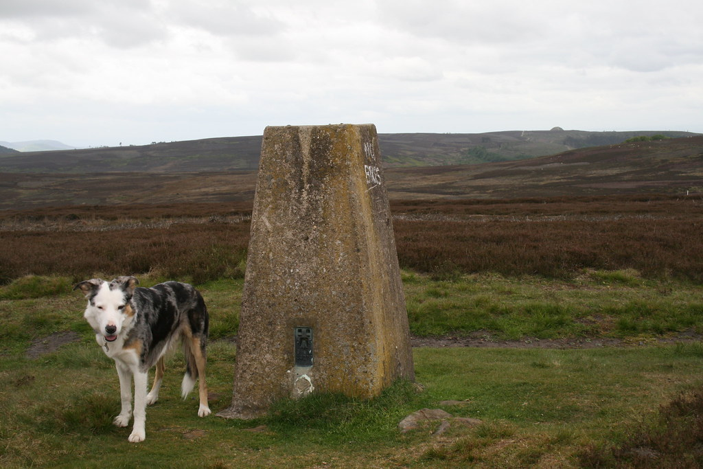 Trig point on Gisborough Moor (not the summit!)