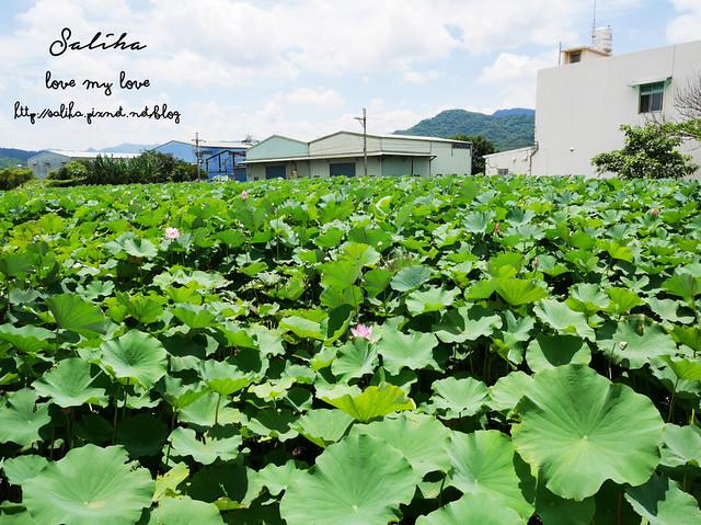三峽蓮花景點 (4)