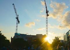 DC Dance of the Cranes 59050