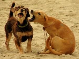perro atancado a otro