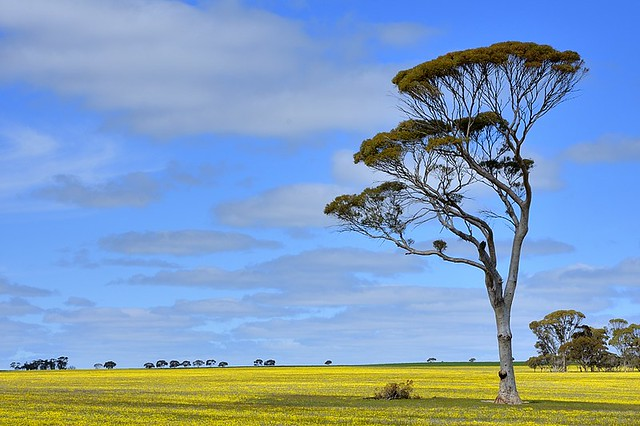 Australia, agricultural scenery