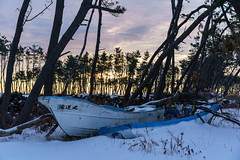 Itsukawame Misawa / Ship in the pine forest.
