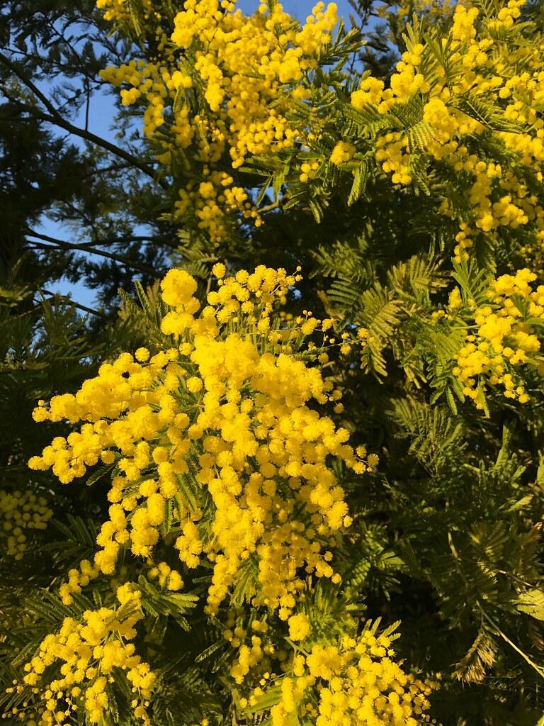 Un si beau jaune