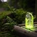 Fireflies by Jonathan Galione