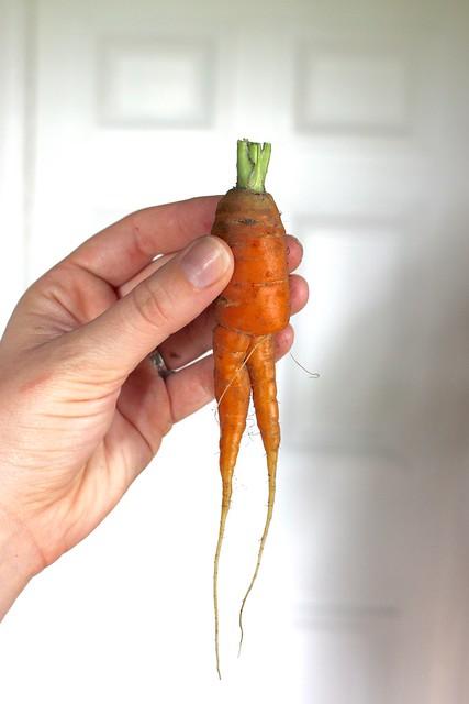 carrot-legs