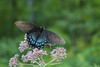 Butterfly at Pennypack Park