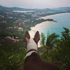 Even the dogs appreciate the view of Chaweng Beach, Koh Samui from the hills behind.