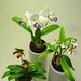 A Trio of Orchids by gabel.peter