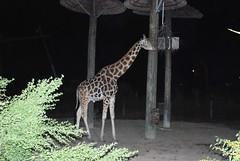 Lowery Park Zoo