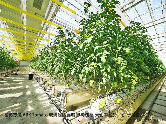 番茄方舟 ARK Tomato 玻璃溫室農場 無毒種植 天使串番茄 16
