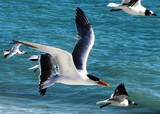 Flying High, Ocean Birds