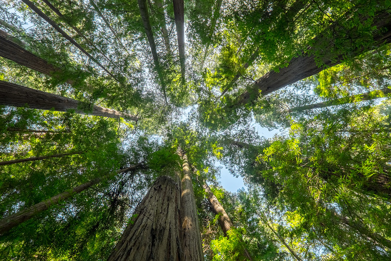 Skyward, Redwoods