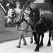 Work Horse, Kline Creek Farm. 4 (EOS) by Mega-Magpie