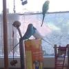 Ob sie mir etwas bestimmtes mitteilen wollen? :laughing: #wellensittiche #birds #budgiesofinstagram