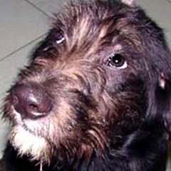 Sette nuovi esemplari, pronti per l'adozione, ospitati nel Canile Sanitario