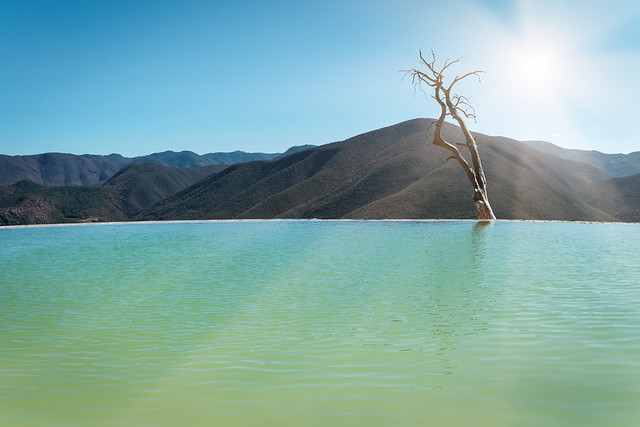 The lonely tree - Hierve el Agua, Oaxaca state, Mexico