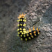 Colourful Caterpillar - Michoacan, Mexico por www.caseyhphoto.com