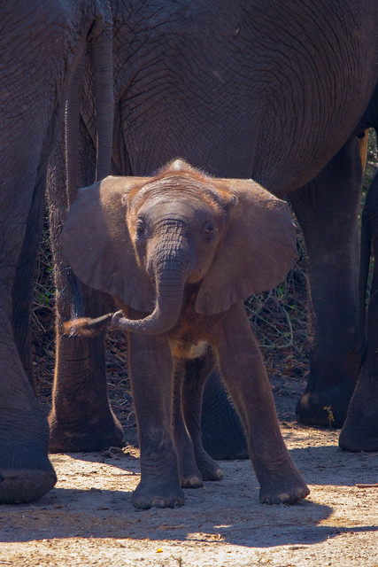 Silly Baby elephant