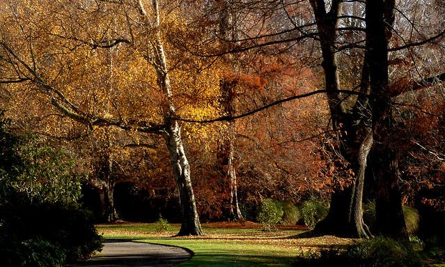 Botanical Gardens. Christchurch NZ