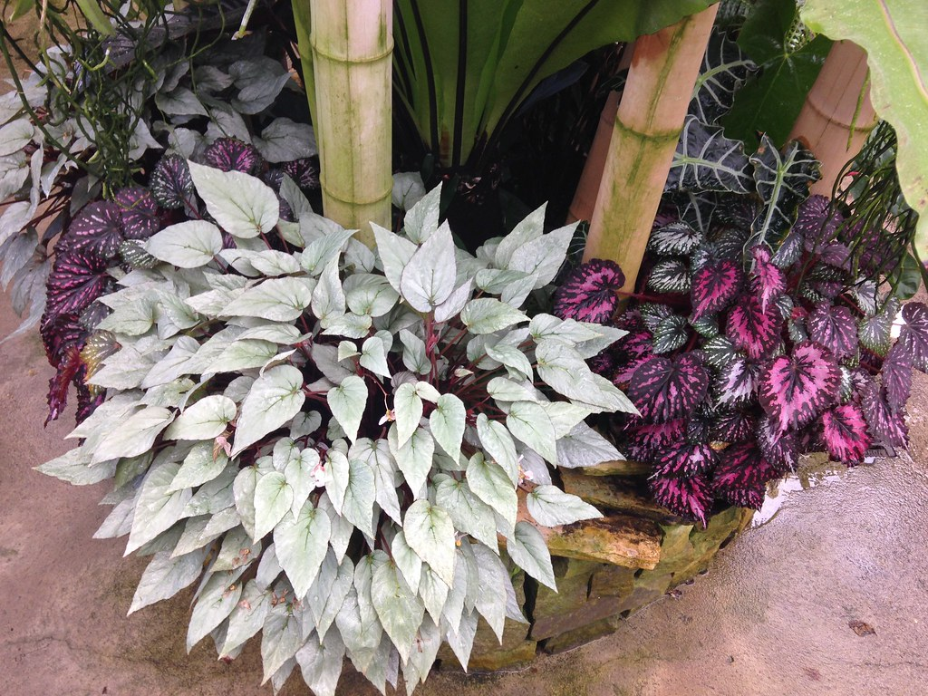 Orchidarium de Prangins 18683868964_f152f28797_b