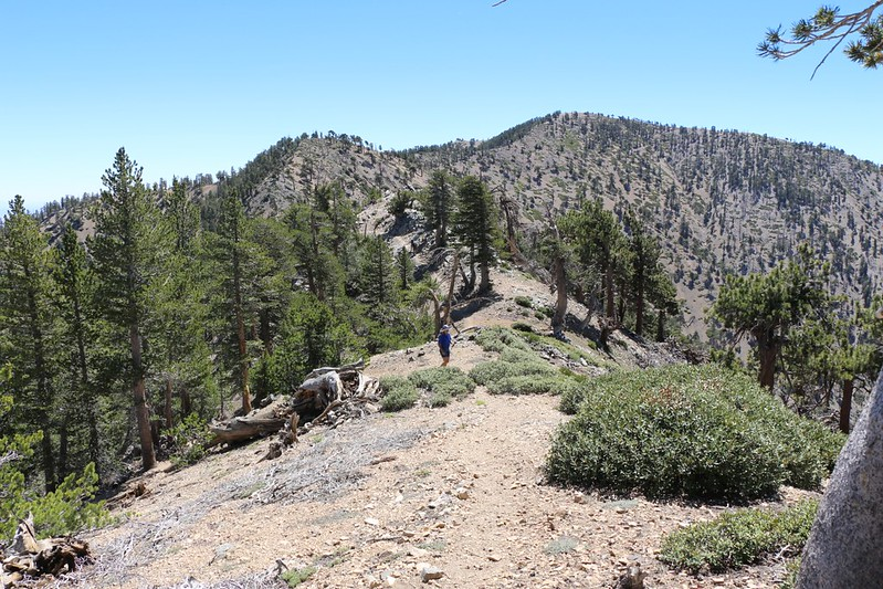Looking back toward Mount Baden-Powell from the east ridge of Mount Burnham.
