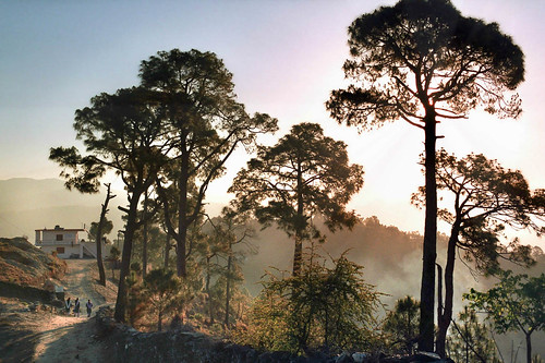 morning travel trees light india foothills mountains film nature sunrise landscape dawn village path ridge remote himalayas northindia kumaon indiansubcontinent kasardevi uttarkhand fredcan