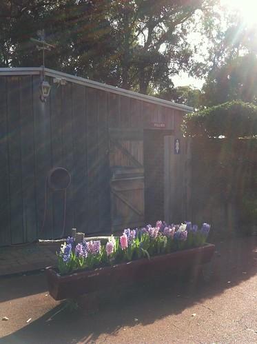 Flower Trough in Sunbeam