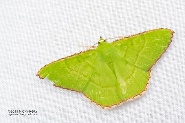 Moth - DSC_4066