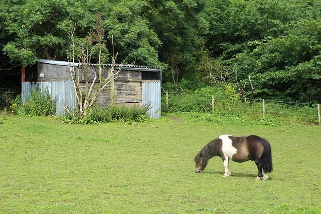 Craigie Farm PYO