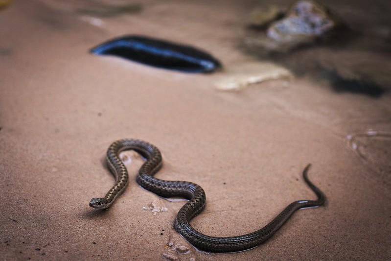 Snake in Zion
