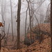 The haunted hike
