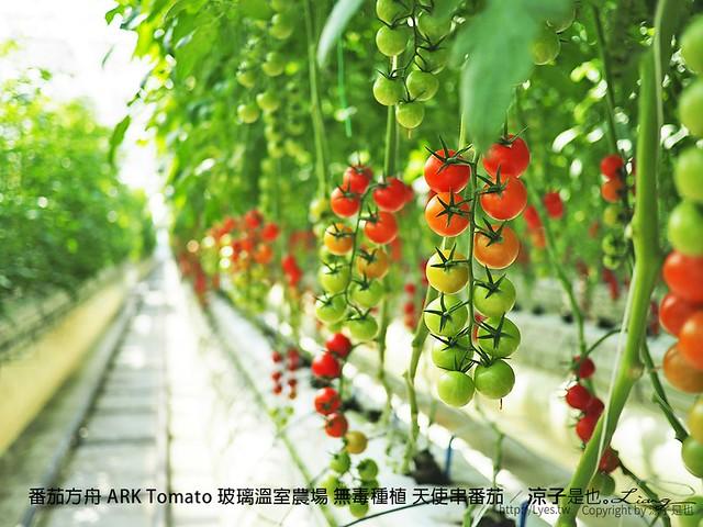 番茄方舟 ARK Tomato 玻璃溫室農場 無毒種植 天使串番茄 34