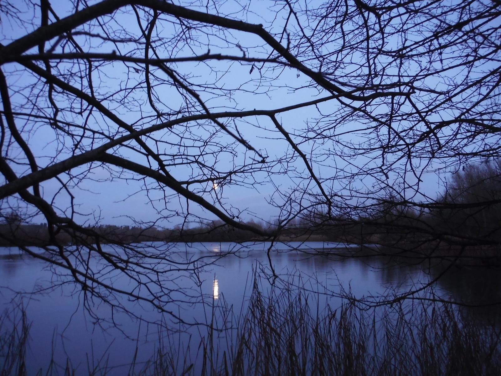 The Moon is Up, Lake in Woolhampton SWC Walk 34 Newbury Racecourse to Woolhampton (Midgham Station)