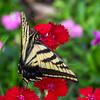 Butterfly 22032013-02