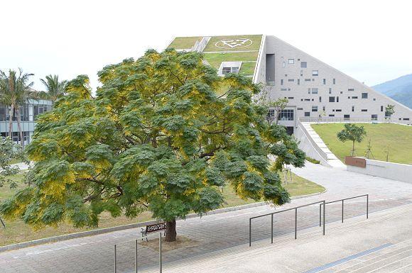 台東大學知本校區圖書館43