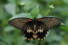 Straffan Butterfly Farm