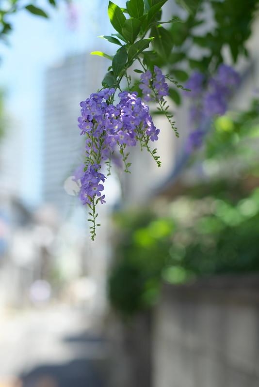 東京路地裏散歩 2015年7月19日