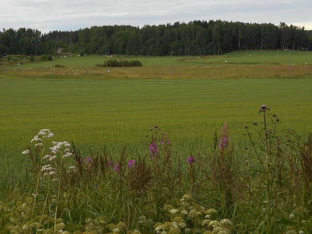 Niittykasveja 12.7.2015 A Espoon Karakallion ja Leppävaaran välinen peltoalue