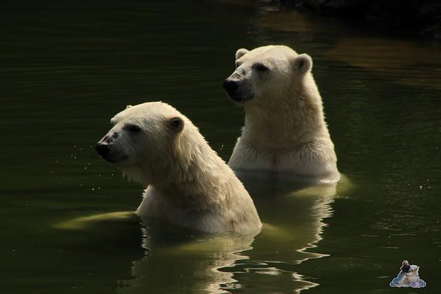 Tierpark Berlin 18.07.2015 067