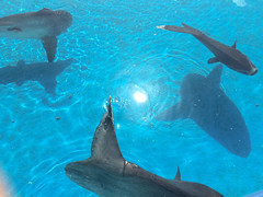 animal, marine mammal, marine biology, whales, dolphins, and porpoises,