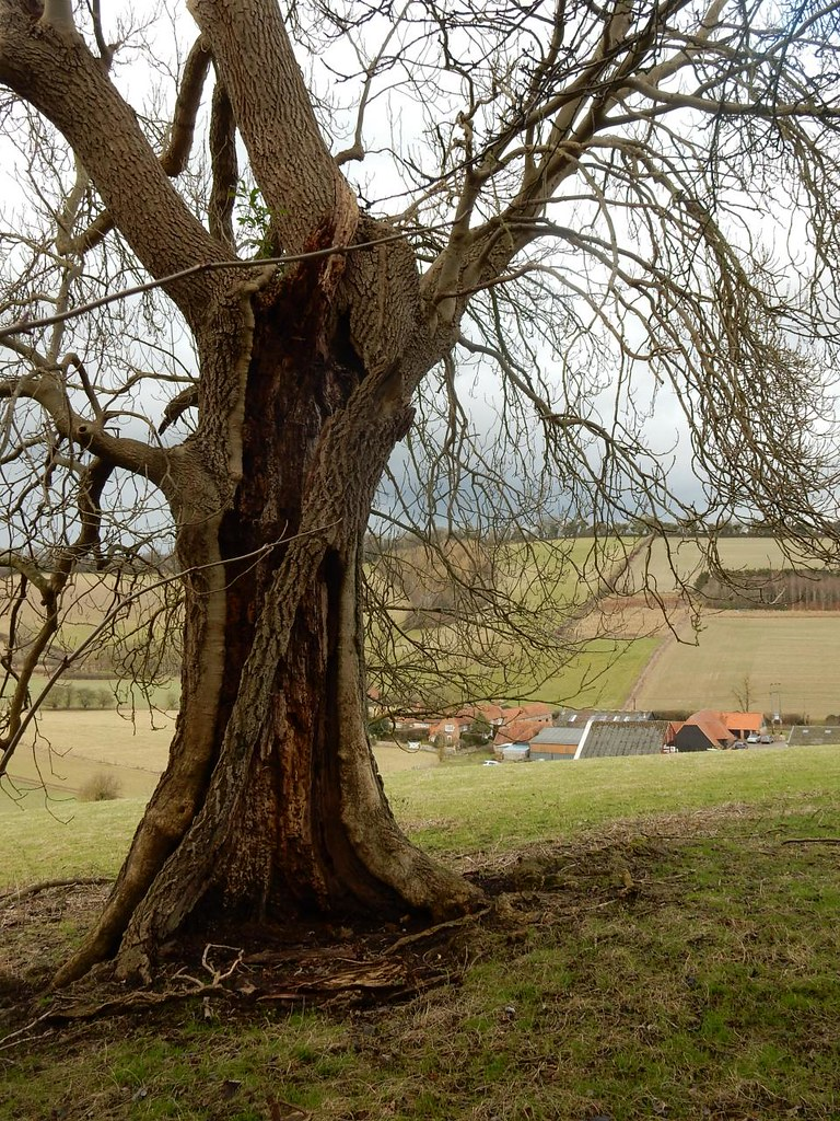 Tree with Valley Farm Henley Circular via Middle Assendon