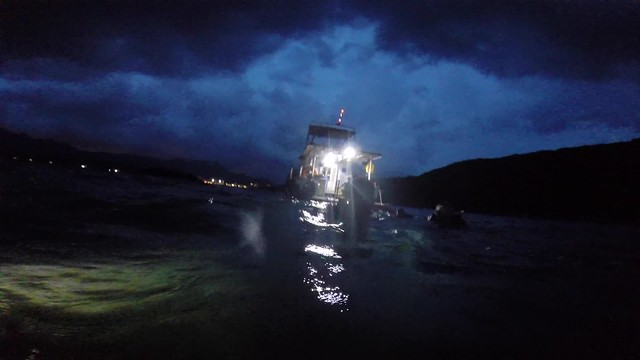 night dive at Sharp Island, HK